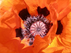 fleurs-astuces