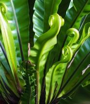 plantes-astuces